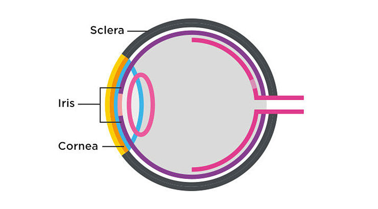 Anatomy of the eye - 1